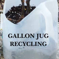 Gallon Jug Plant Container